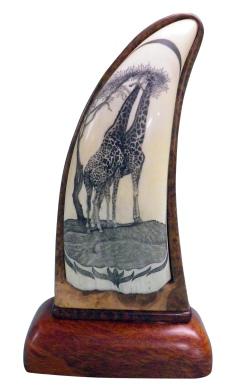Giraffes Scrimshaw