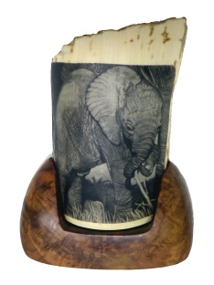 Baby Elephant Scrimshaw