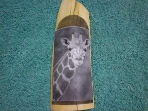Giraffe Scrimshaw: Step 6