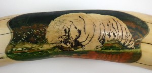Step 7: Tiger In Water Scrimshaw After 75 Hours