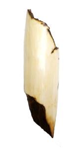 Sanded Ivory for Parrot Scrimshaw