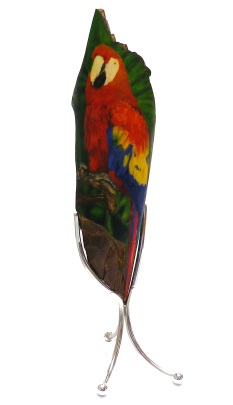 Parrot Scrimshaw